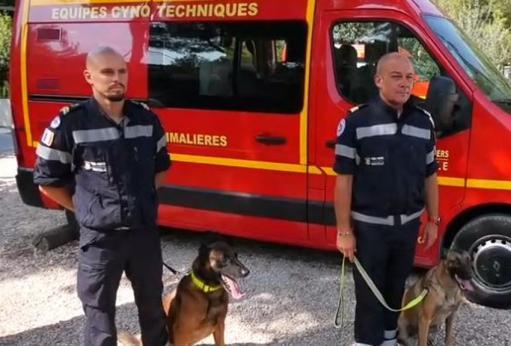 1535557890 chiens