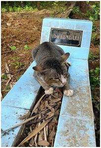 Chat sur tombe