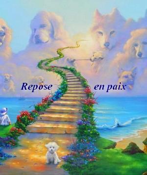 Chien paradis 1
