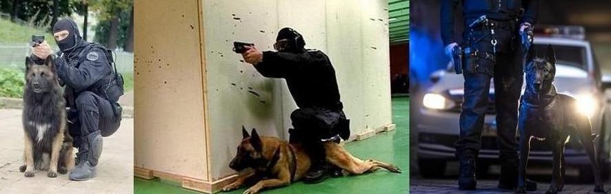 Chien police 12