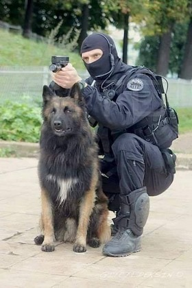 Chien police 21