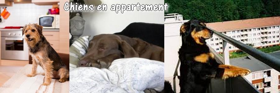 Chiens en appartement