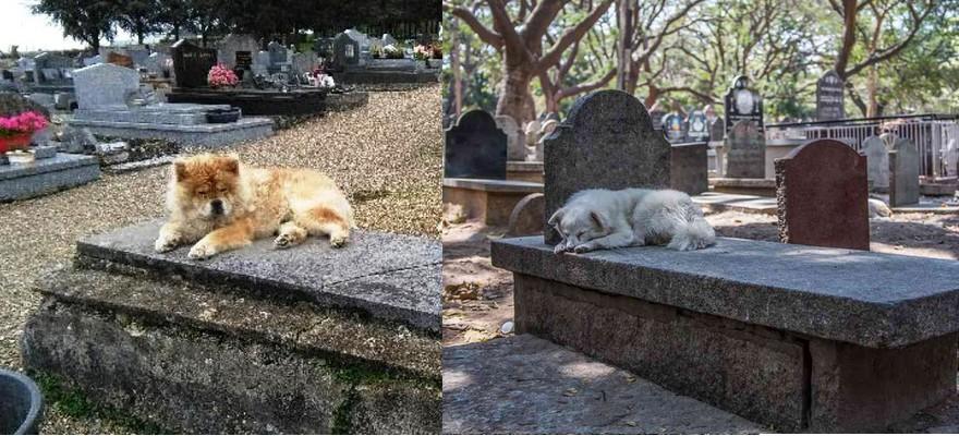 Chiens sur la tombe de