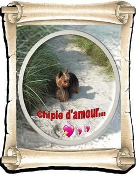 Chipie 10