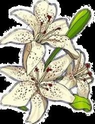 Fleur182 inpixio