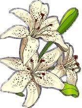 Fleur182