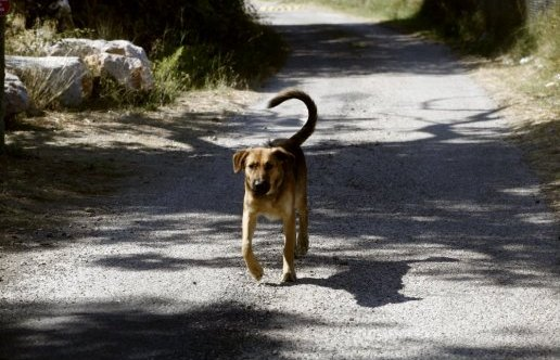 L ete est la pire des saisons pour les chiens perdus qui 786760 516x332