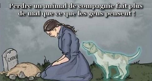 Perdre un animal de compagnie 2