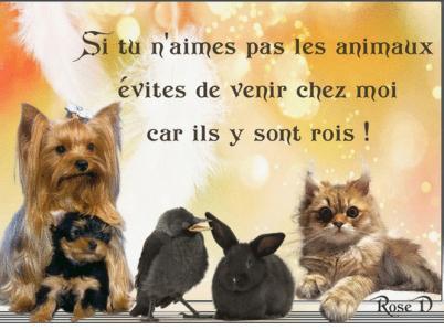Si tu n aimes pas les animaux