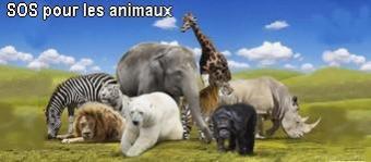 Sos pour les animaux 1